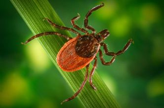 lyme-disease-treatment-1_77092_990x742
